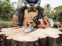 В Башкирии возбудили уголовное дело против нелегальных лесорубов